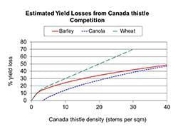 Estimated yield losses from Canada thistle competition