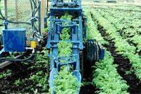 Carrot harvester