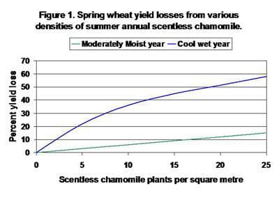 Spring wheat yield losses from various densities of summer annual scentless chamomile