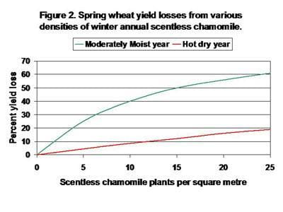 Spring wheat yield losses from various densities of winter annual scentless chamomile