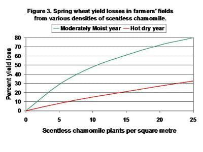 Spring wheat yield losses in farmers' fields from various densities of scentless chamomile