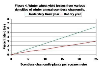 Winter wheat yield losses from various densities of winter annual scentless chamomile