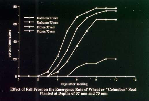 Effect of fall frost graph