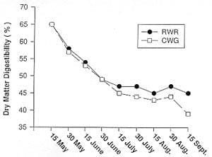 Effect of date of harvest on percentage of dry matter digestibility of Russian wild rye and crested wheatgrass
