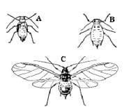 Insect stages