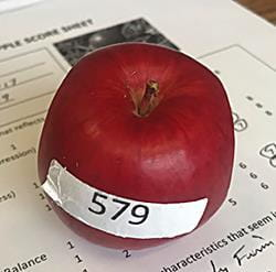 New University of Saskatchewan apple