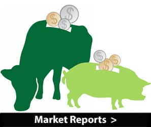 Livestock Market Reports