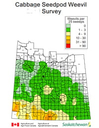 Cabbage seedpod weevil survey map