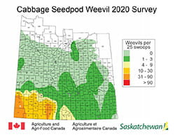 Cabbage Seedpod weevil survey results map 2020