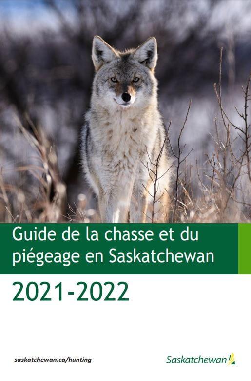 Guide de la chasse du piégeage en Saskatchewan 2021-2022 image d'un coyote
