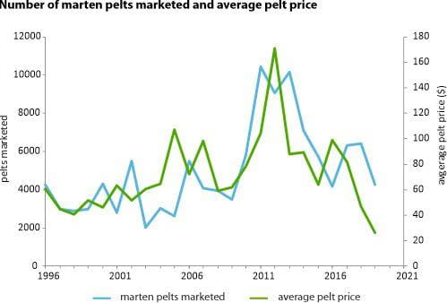 Number of marten pelts marketed