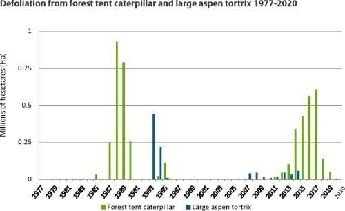 Defoliation from forest tent caterpillar