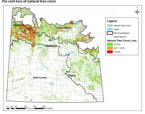 Per cent loss of natural tree cover