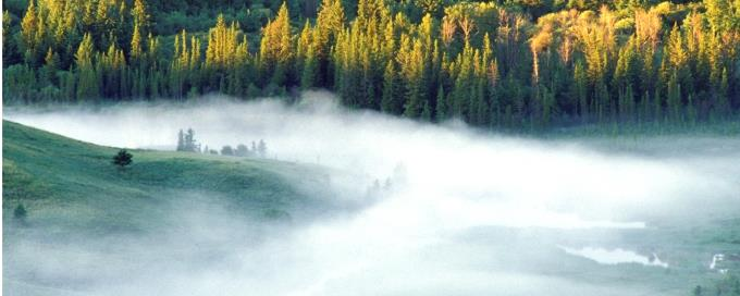 Intact boreal forest