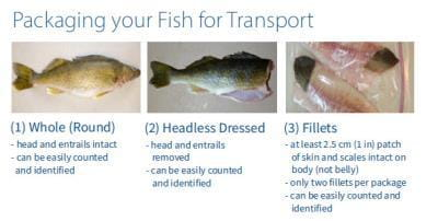 package your fish for transport