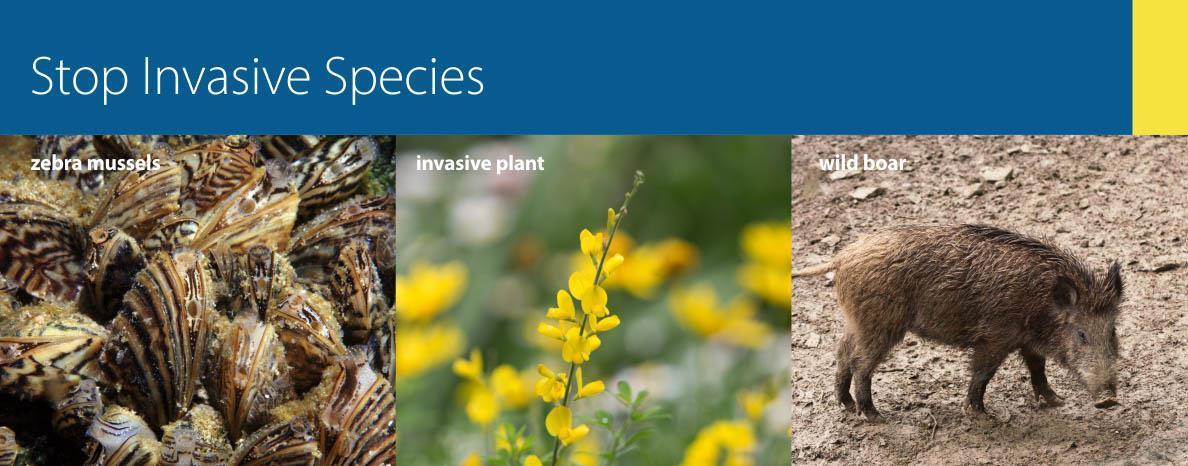 Stop Invasive Species heading image