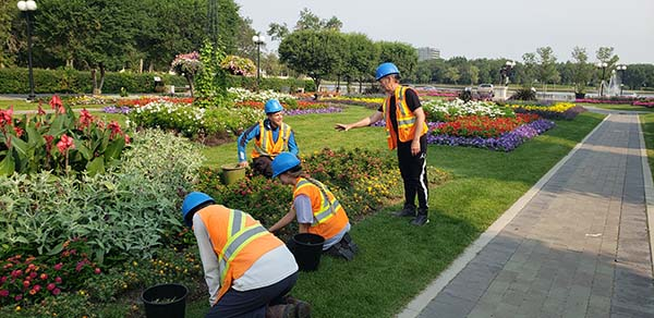 Four workers tending to the gardens in front of the Legislature Building