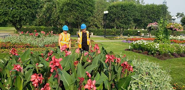 Two workers standing behind large flower bed in garden