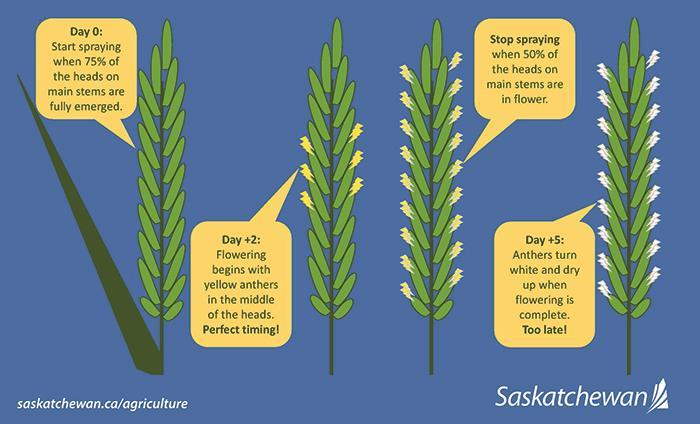Infographic showing when it's best spray your crop