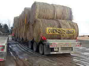 Trailer with oversize load of bales
