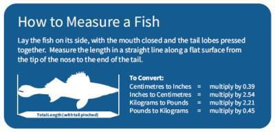 How to measure a fish
